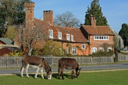 New Forest National Park Authority..Beaulieu, including main streets, and birds beside the weir, and ponies on the open forest just outside the village..Note: Cyclists passed through without stopping and are not model-released, but are on public highway